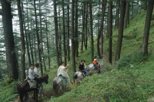 horseback ride naldehra