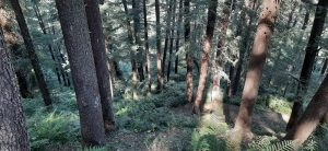 letstourindia_deodar_forest_naldehra